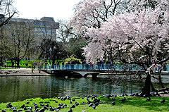 Картинки лондона весной